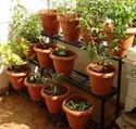 Garden Plant Stands