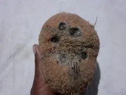 Five Eye Coconut
