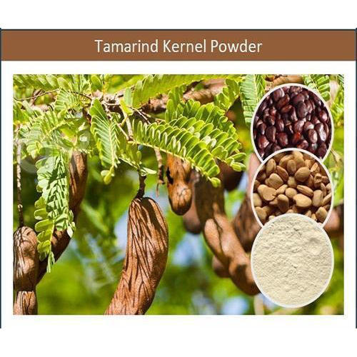 Highly Viscous Soil Stabilizer Tamarind Kernel Powder