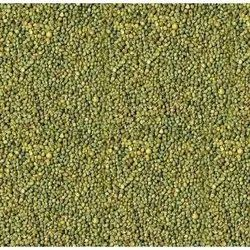 Green Pearl Millets, High in Protein