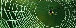 Spiders Pest Control Service