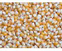 Indian Corn, Packaging: 25 & 50 Kg
