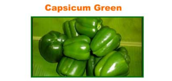 Capsicum Green Vegetables