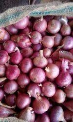 Onion Nashik Red