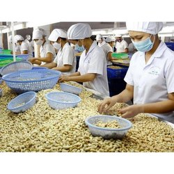 Unisex Cashew Manpower Labour Service