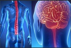 Neurology and Surgeon