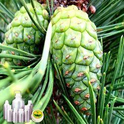 Pine Needle Oil