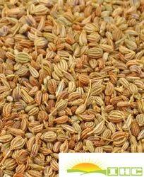 IHC Seeds AJWAIN, Dry Place, Grade Available: Grade A