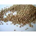 Carom Seeds - Ajwain
