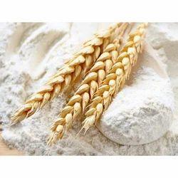 Amico Fresh Wheat Flour, Pack Type: Bag