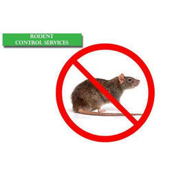 Monthly Commercial Rodent Control Services
