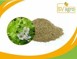 Bacopa Maonniera/Brahmi Extract