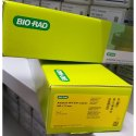 Aminex HPX-87H Bio-Rad Column
