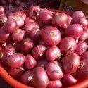 Indian Nashik Onion