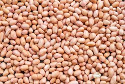 Bold Peanuts Edible Quality