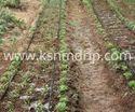 Garden Flat Emitter Pipes Irrigation System