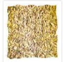 Caraway Seed Spices