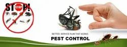 Termite Control for Residential and Commercial Property