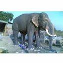 Grey Frp Elephant Statue, For Exterior Decor