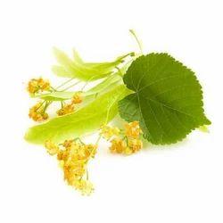 Linden Blossom  Oil