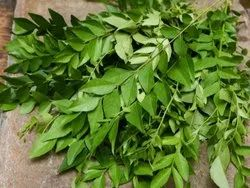 A Grade Air Dried Curry Leaves, Plastic Bag, Packaging Size: 5 Kg