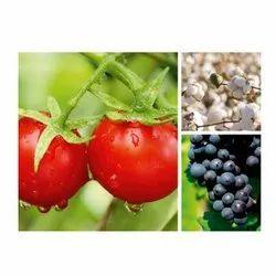 Isagro Emerald 100 g/l Fungicides Product