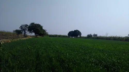17 Gunthas Agricultural Land For Sale In Khed Shivapur, Pune