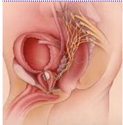 Prostate Cancer Treatment Services