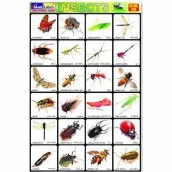Insects Chart