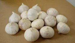 Light Brown Garlic Single Clove