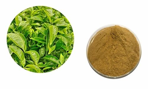 Green Tea Extract Polyphenols 50% And 90%