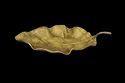 Golden Teak Leaf