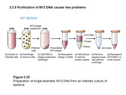 Lambda Phage DNA Isolation Teaching Kit