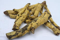 Saptrangi Salacia Reticulata