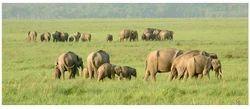 Rajaji National Park Wildlife Tours