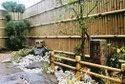 Treated Bamboo Pole