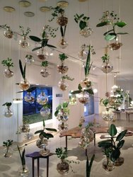 Round Transparent Glass Planter, For Decoration, Size: 2-4