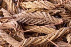 Marod Fali - Helicteres isora - Avartani
