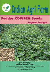 Cowpea Fodder Seeds