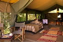 Exotic African Safari Tent