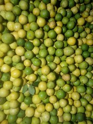 Gudur Lemon ((Bulk Supplies VOLUME Business Only))