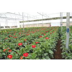 Greenhouse Services for Plant