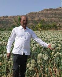 Poona Fursungi Onion Seeds