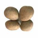 Kufri Himalini Seed Potatoes
