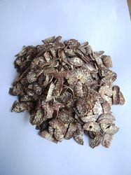 Cutted Betel Nut