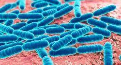 Aqua Probiotic