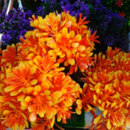 Exotica Flowers