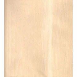 Indian White Cedar