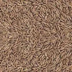 24 Months Cumin Seed