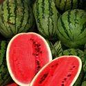 Watermelon Cold Storage Rental Services